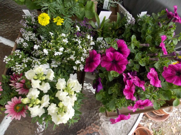 Milmont flowers, vegetables 014