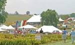 Daylily Wine Festival