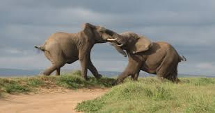 GOP elephants fighting