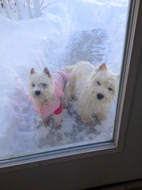 Snow Trixie 3