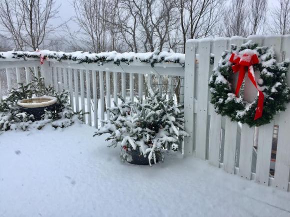 snow-12-jan-2017