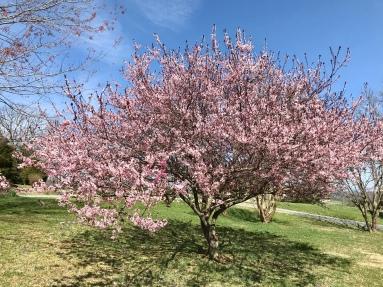 Spring 7